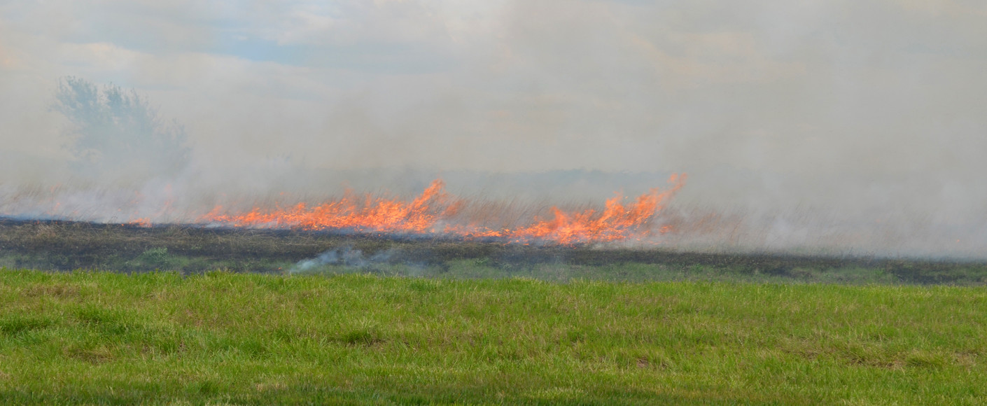 Why farmers burn fields