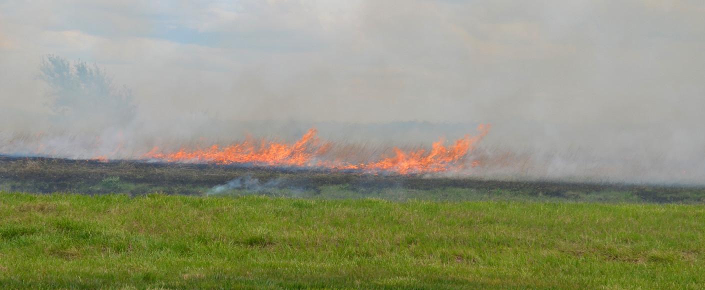 Why farmers burn fields
