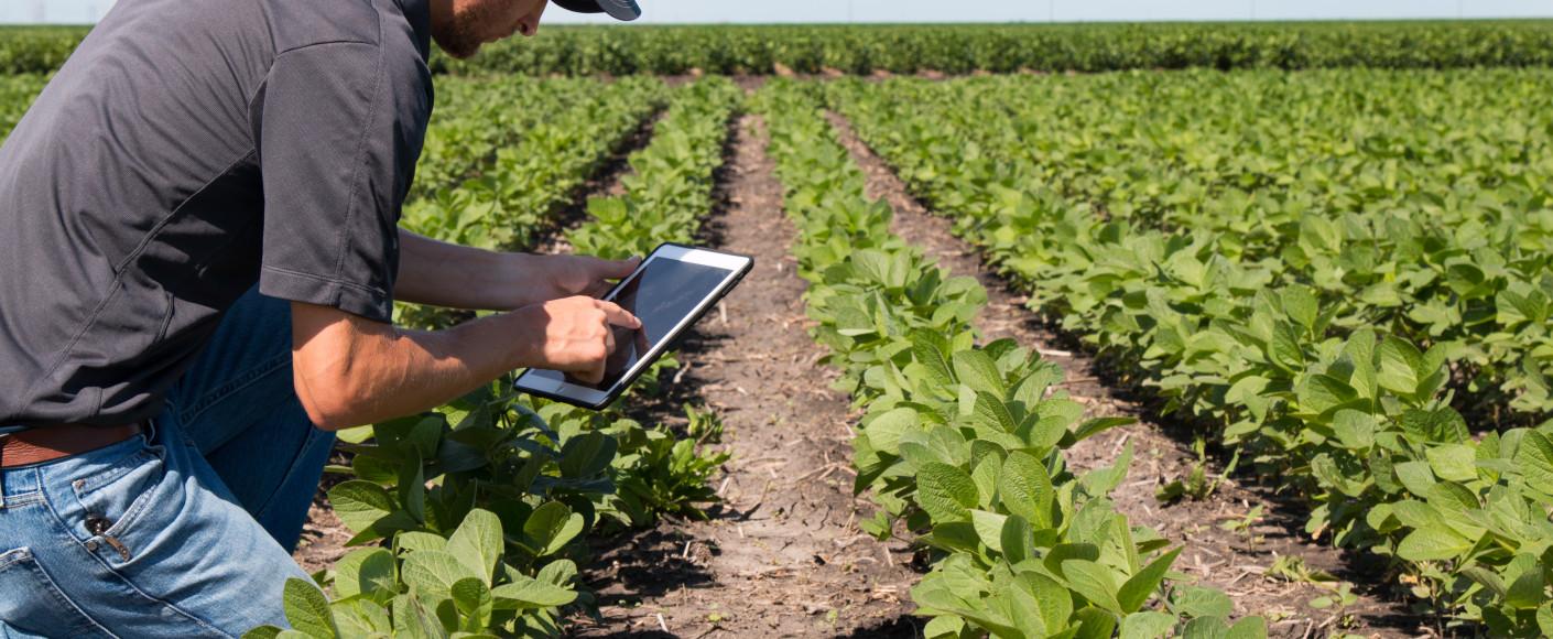 Farmer in Field With Technology