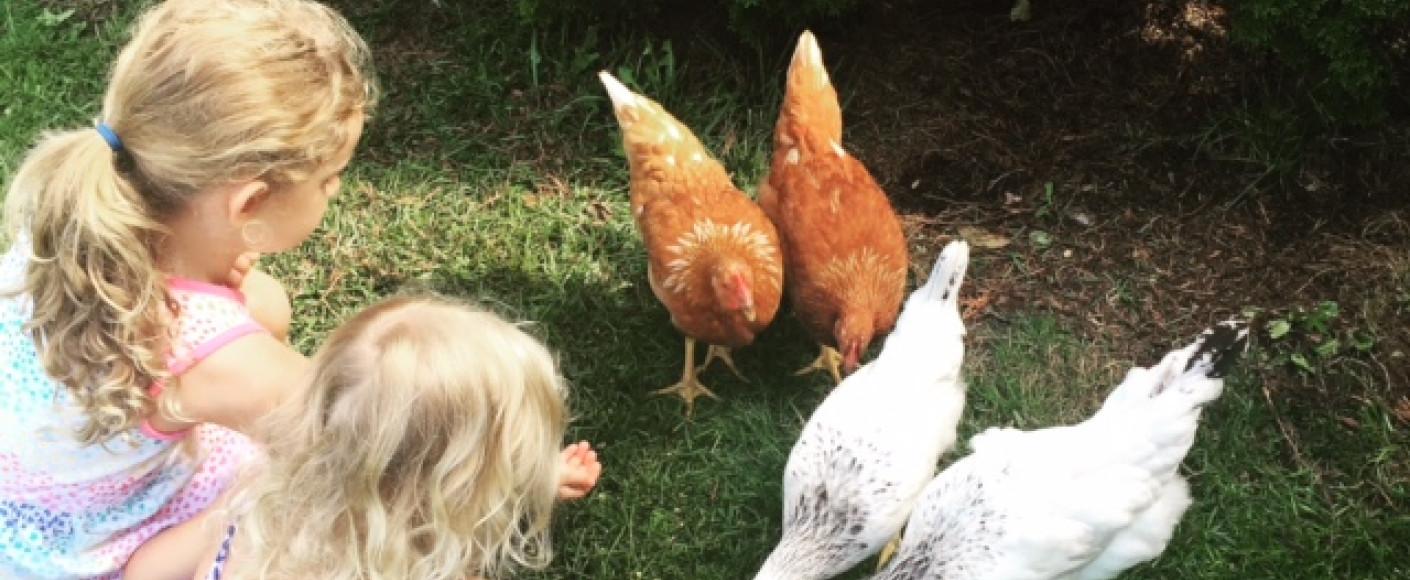 Get to Know a Farm