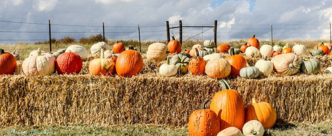 Behind The Scenes Of A Pumpkin Patch Kansas Farm Food Connection