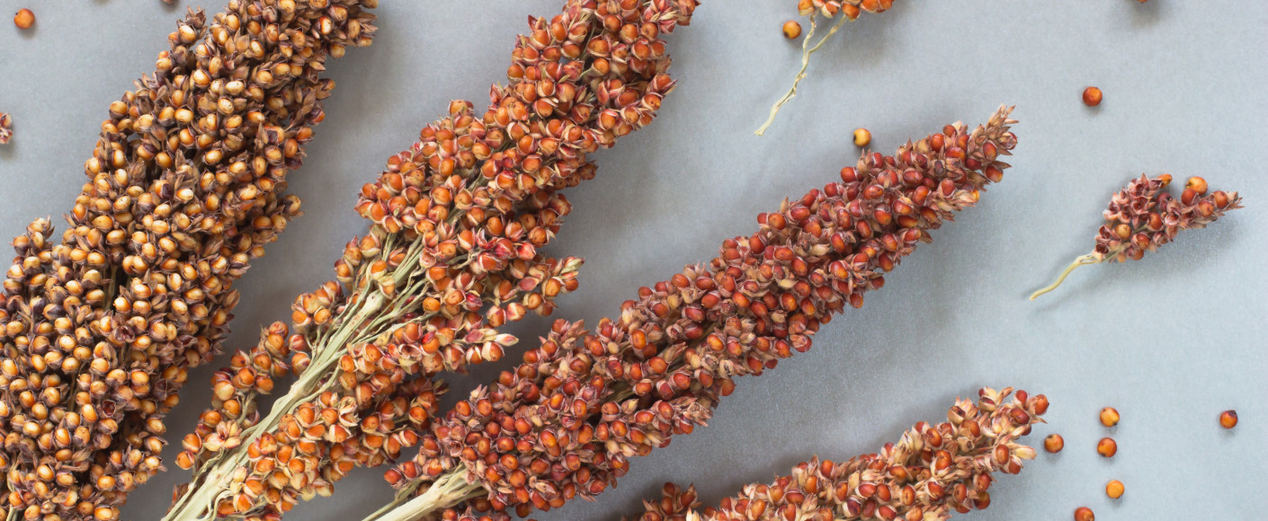 Sorghum and Sustainability