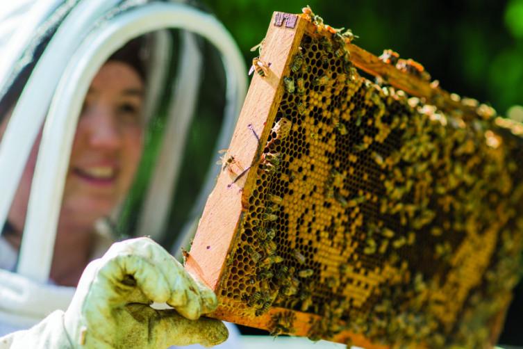 Shop local - Beekeeper