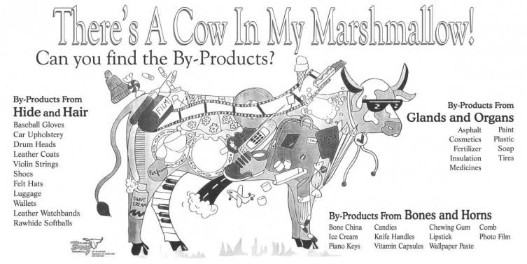 KLA Cow Graphic