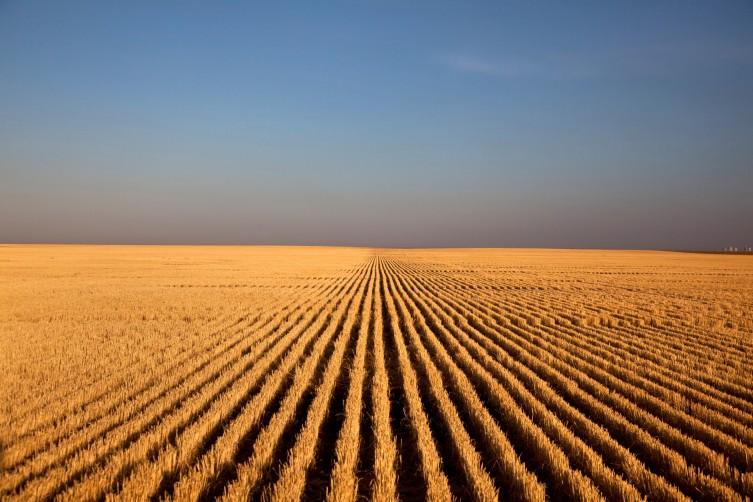 Kansas Land Exhibit photo: Wheat field
