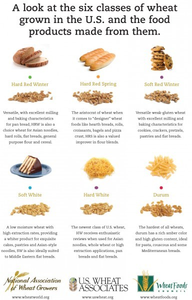 Wheat Infographic