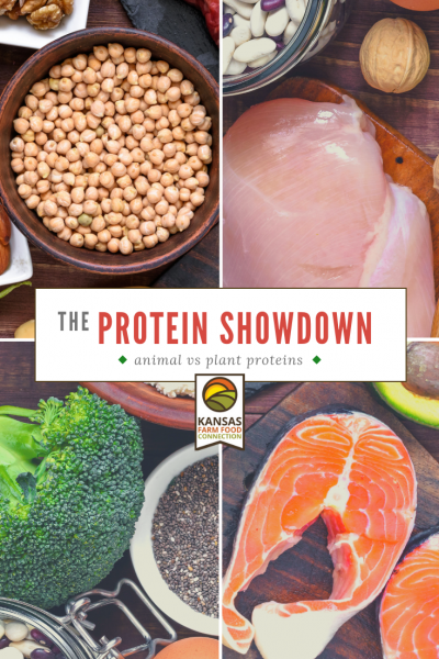 Protein Showdown: Animal or plant