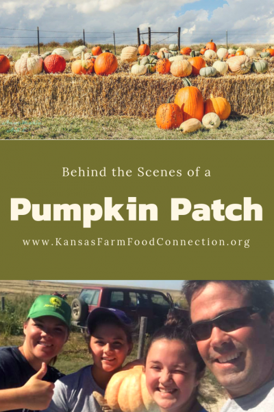 Behind the Scenes of a Pumpkin Patch share