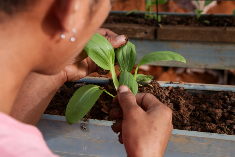 Woman inspecting a plant
