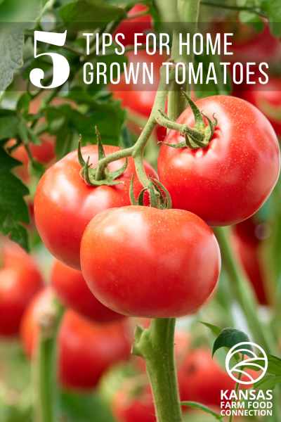 How to Grow the Perfect Home Grown Tomatoes