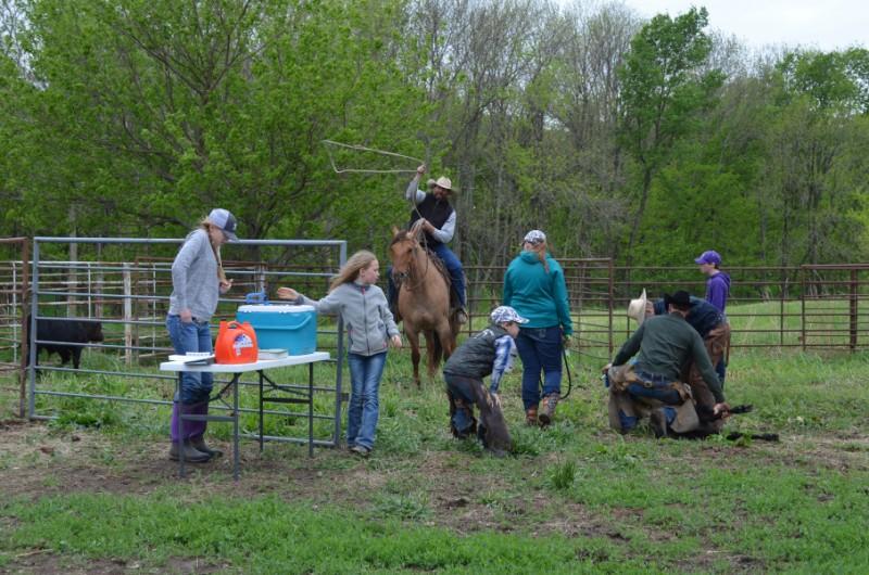 Antibiotics and Vaccines in Livestock | Kansas Farm Food Connection