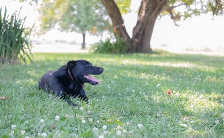 Little Sammy Jinkins - Farm Dog
