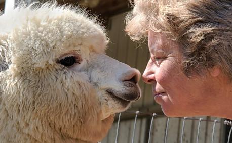 Manna Meadows Alpaca Farm