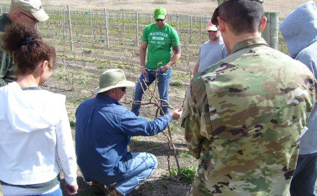 Veterans at the SAVE Farm in Manhattan learning to grow grapes