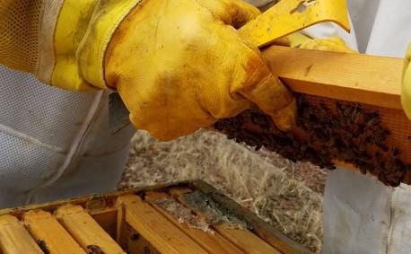 RemeBees beekeeping
