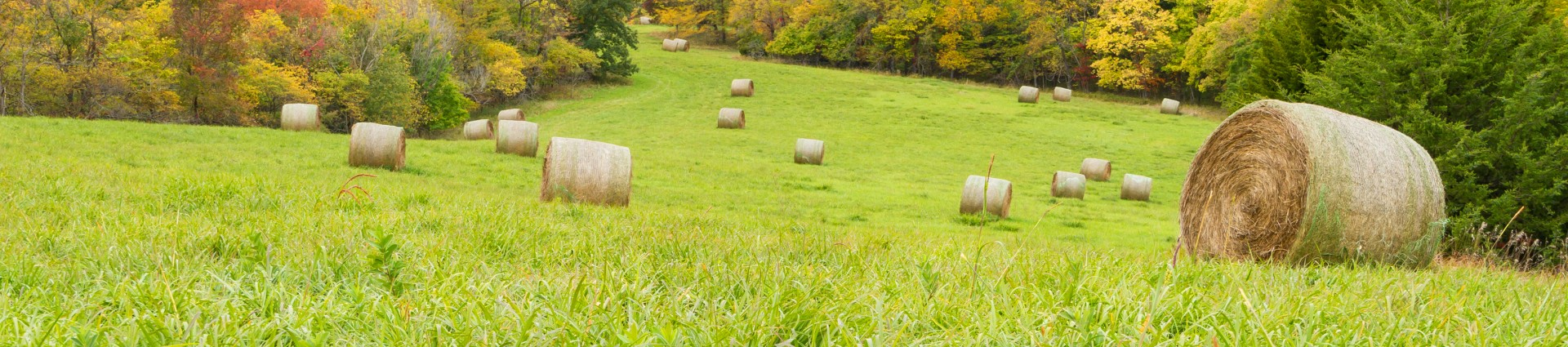 A field with rolled hay bales