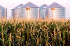 Corn field and storage-grain and ethanol
