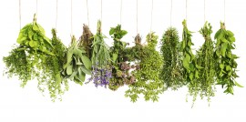 10 Herbs to Cook With