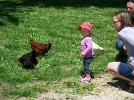 Spring Farm Chickens